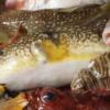 写真:【6/18(日)さぬきマルシェinサンポート】さぬきマルシェのテーマは、「お魚マルシェ」です!!