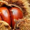 写真:【10/1(日)さぬきマルシェinサンポート】さぬきマルシェのテーマは、「秋の収穫マルシェ」です!!