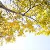 写真:10月7日(日曜日)のさぬきマルシェは、「新米ごはんマルシェ」です!!