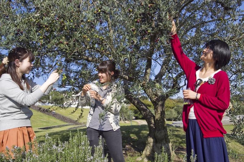 올리브 나무와 세 여자