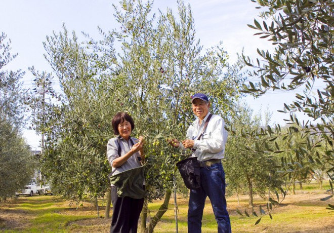 Olive tree and smiling men and women pictures