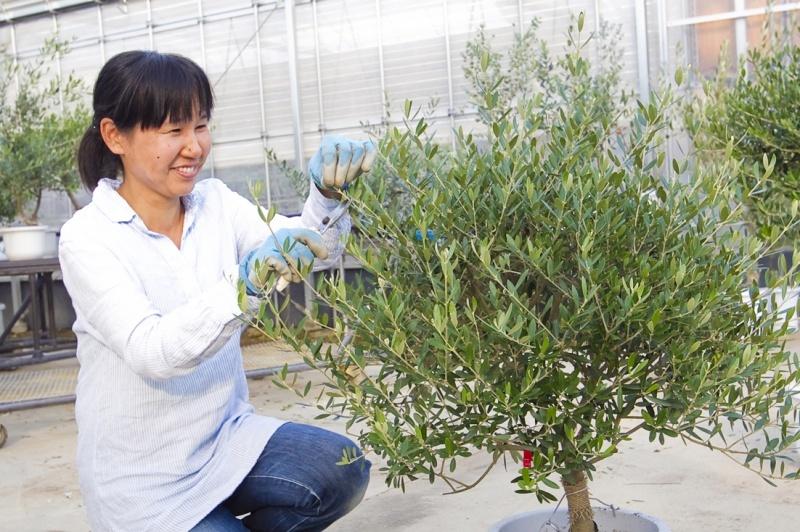 나무를 손질하는 여성