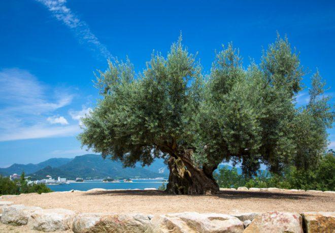 空と木の景色の写真