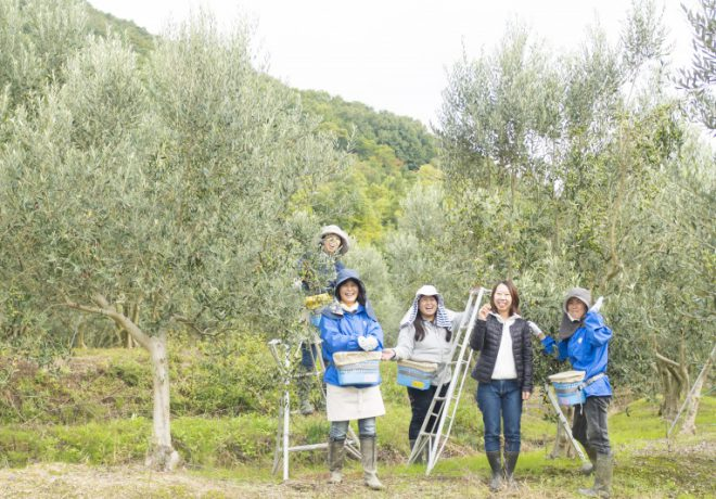 Olive tree and 5 women harvesting