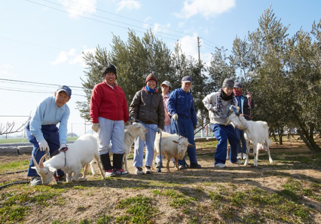 一棵橄欖樹前的4只山羊和7位面帶笑容的男人和女人