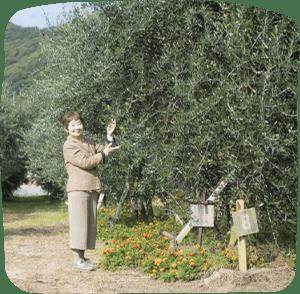 瀨戶內橄欖