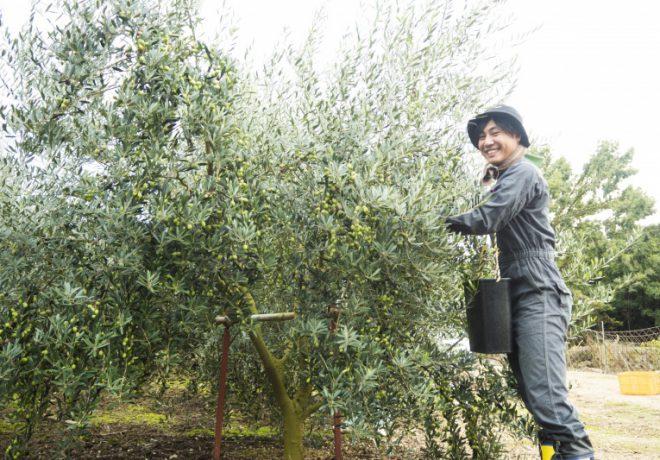 オリーブの木と笑顔の男性