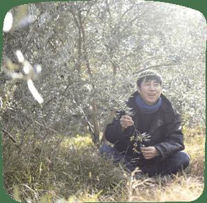 山田橄榄园