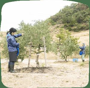 瀨戶內橄欖基金