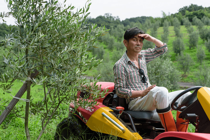 Riding workers in the olive groves