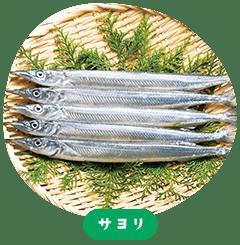 Japanese halfbeak