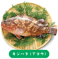 Pheasant grouper (Akou)