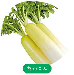 Japanese white radish