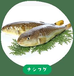vermicularis Takifugu