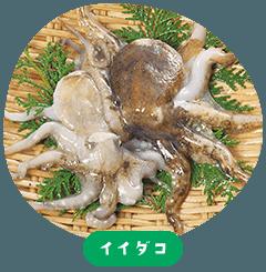Iidako(octopus)