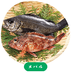 Japanese rockfish