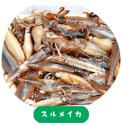 Japanese Flying Squid