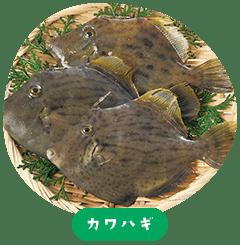 filefish