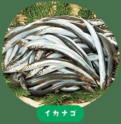 Japanese sand lance