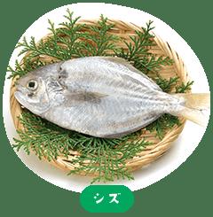 Shizu(Ibodai)