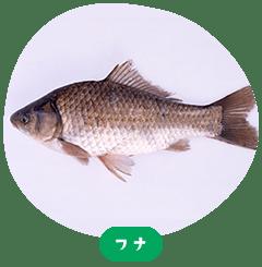 ปลาคาร์พ Crucian