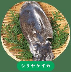 Shiriyake-ika