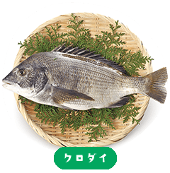 black porgy