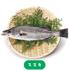 Japanese sea bass