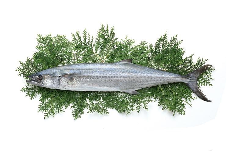 ภาพถ่ายปลาทูสเปน
