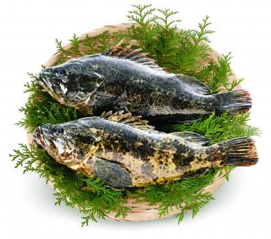竹筍魚的照片
