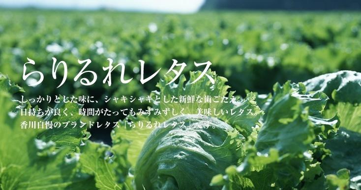 拉里生菜的照片