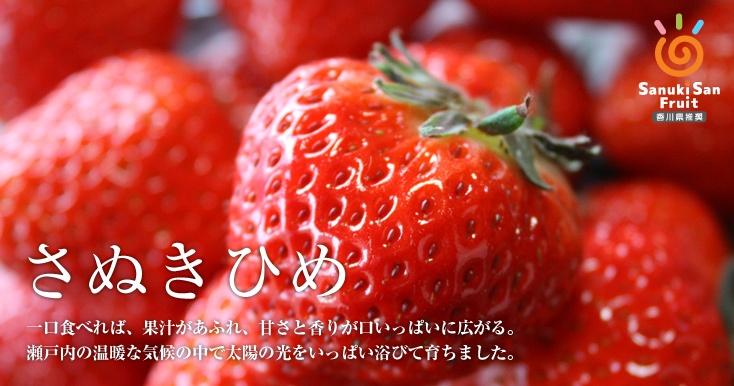 딸기 (さぬきひめ) 사진