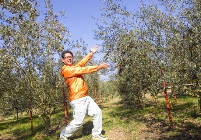 所有者和橄欖樹的照片