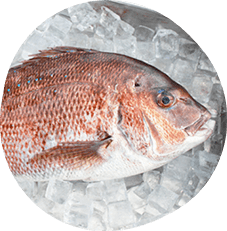 Olive red sea bream
